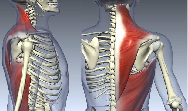 www.overpress.it-exerceo-fitness-salute-benessere-allenamento-postura-canali-system-scapolo-omerale