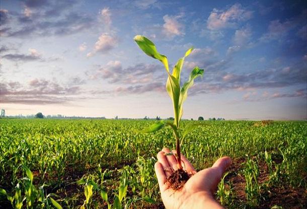 www.overpress.it-exerceo-alimentazione-salute-benessere-allenamento-bio-agriicoltura-biologica
