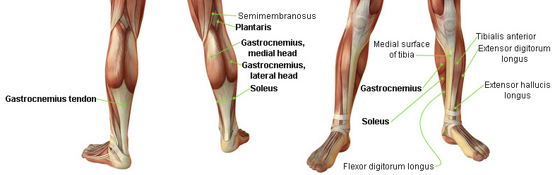 www.overpress.it-running-exerceo-salute-benessere-corsa-run-doms-runners-crampi-muscolari