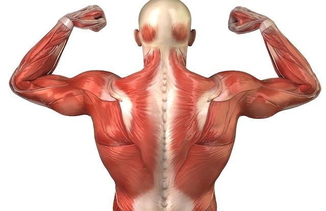 correre-sala-pesi-allenamento-bodybuilding-exerceo-salute-benessere-allenamento
