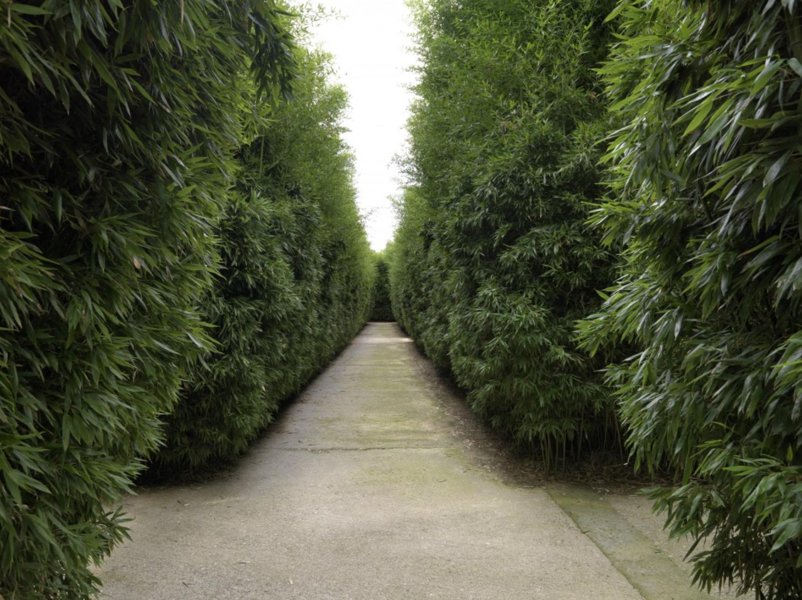 Il labirinto più grande del mondo apre a Parma. Lo ha voluto Franco Maria Ricci