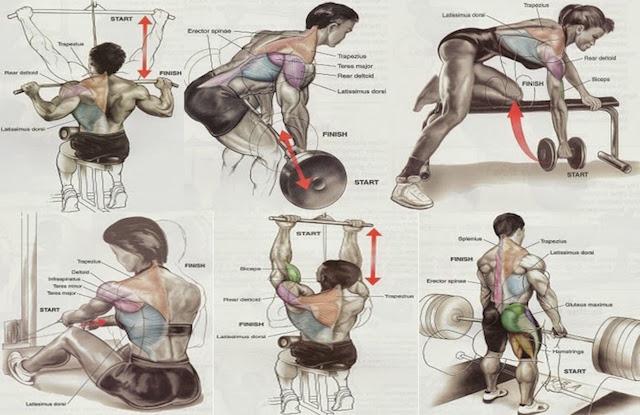 spalle-dorso-allenamento-training-exerceo