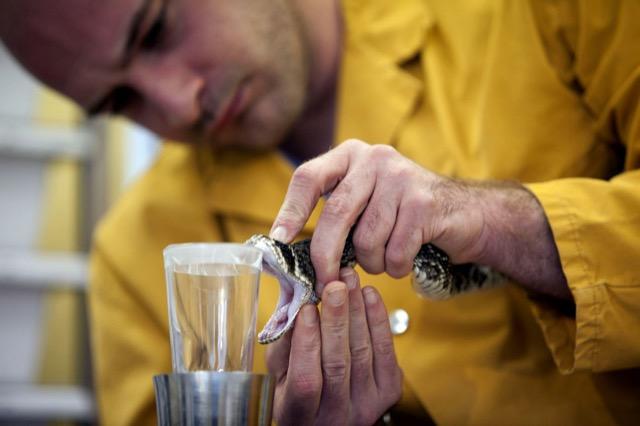 estrattore-veleno-serpenti