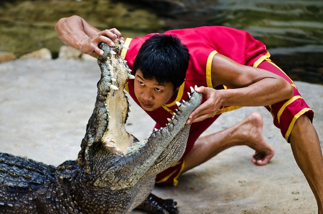 lottatori-coccodrilli