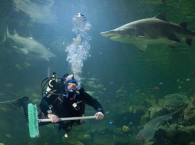 pulisci-vetri-squali